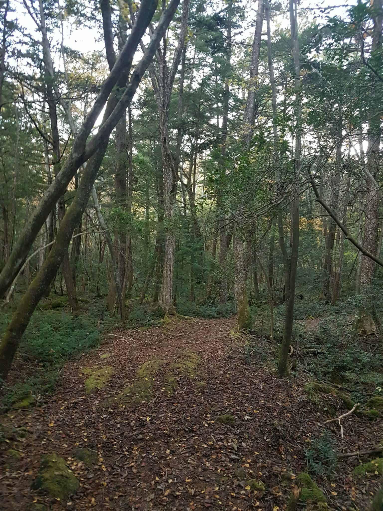 Aokigahara Wanderroute