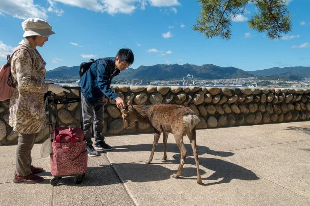 Tourist auf Miyajima streichelt Bambi