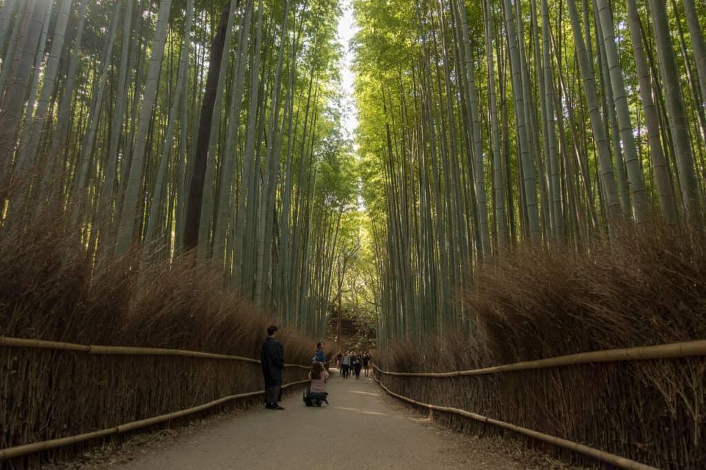 Bambuswald mit weniger Touris