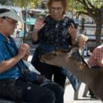 Reh frisst Touristen aus der Hand