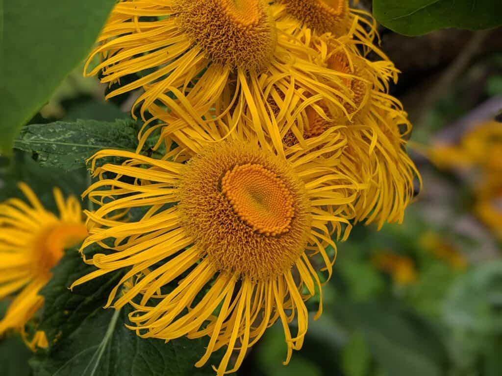 Blumen blühen